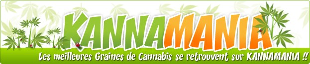 Ventes de graines de cannabis f&eacute;minis&eacute;es et automatiques - Kannamania